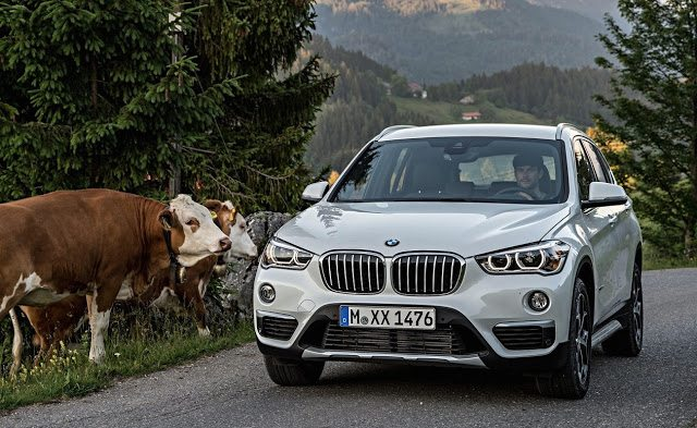 2016 BMW X1 white cows