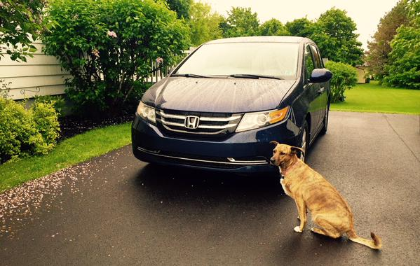 2015 Honda Odyssey EX Honey the dog