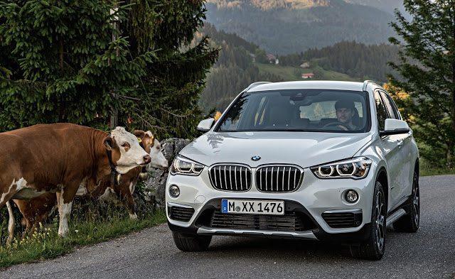 2016 BMW X1 white cows
